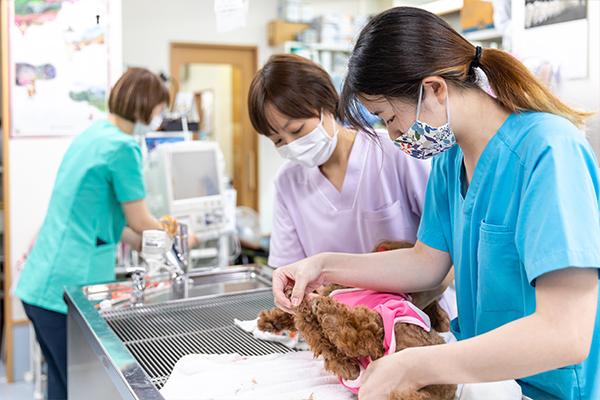 動物の性格に合わせて優しく丁寧に診療